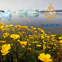 Flowers in the foreground with icebergs in the background from Al Jazeera