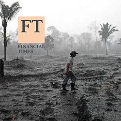 Destrcution with palm trees in the background from Financial Times